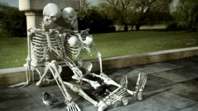 Photo of Fanwidth Episode 025: Bone Tiddies