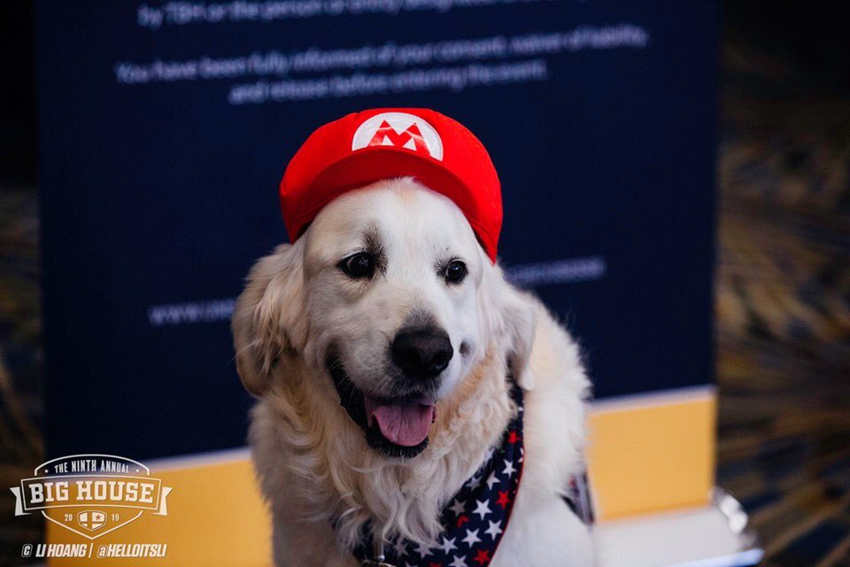 Dog in Mario hat at The Big House Smash Tournament