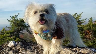 Photo of Fanbyte Staff Pet of the Month: Bixbi