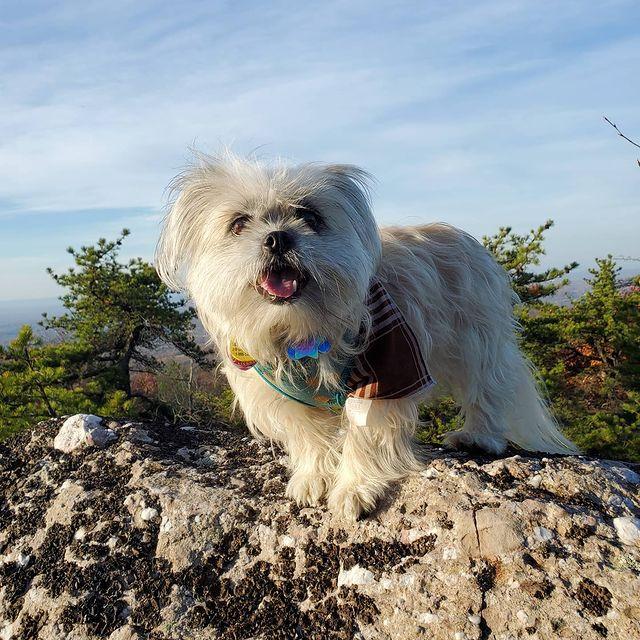 bixbi mountaintop