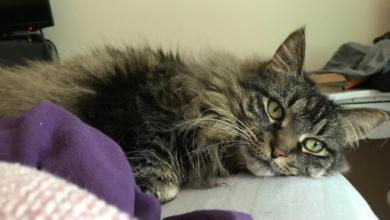 Photo of Fanbyte Staff Pet of the Month: Gilmer