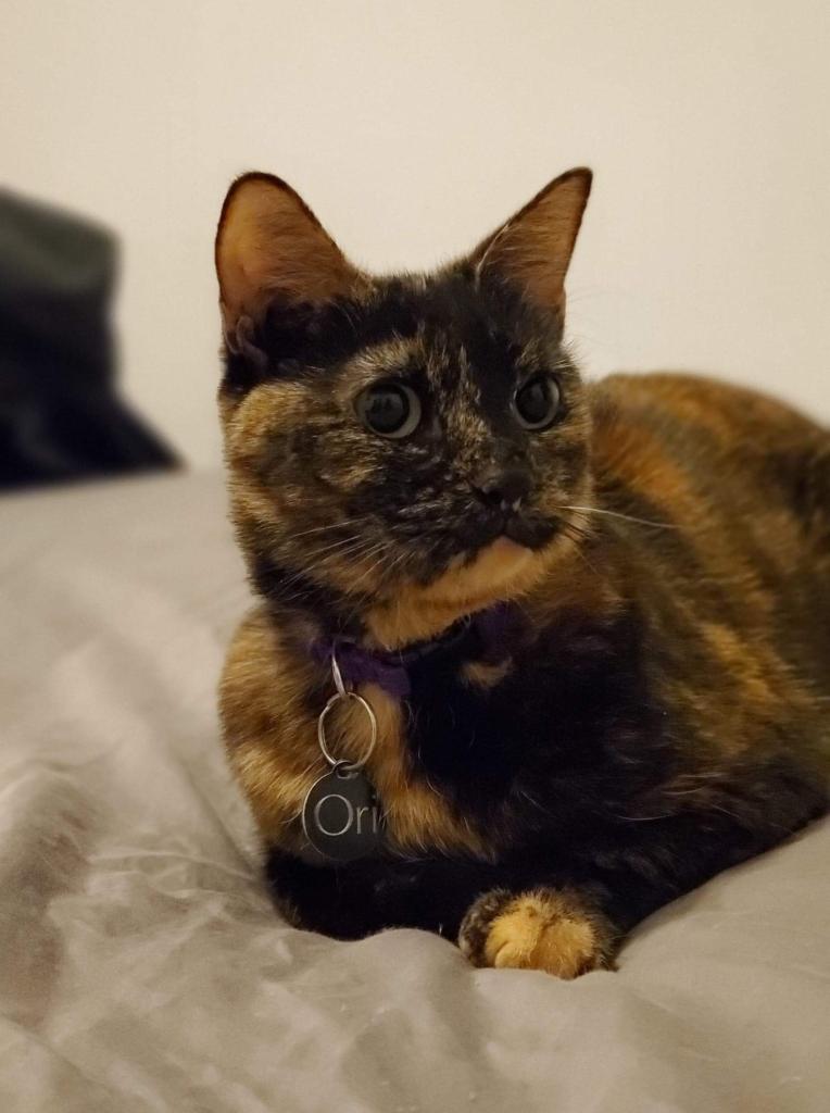 Ori cat looking right
